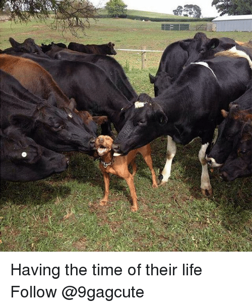 Life, Memes, and Time: Having the time of their life Follow @9gagcute