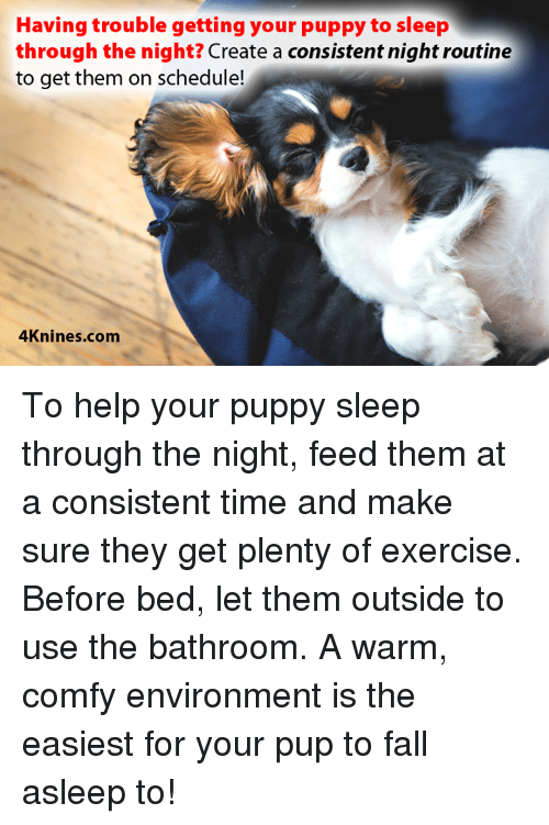 Having Trouble Getting Your Puppy To Sleep Through The Night Create