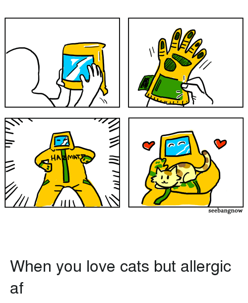 hazmat seebangnowy when you love cats but allergic af 9310184 hazmat seebangnowy when you love cats but allergic af cats meme on