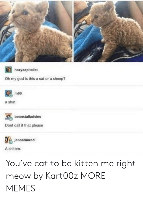 Dank, God, and Memes: hazycapitalist  Oh my god is this a cat or a sheep?  m86  a shat  beanstalkofsins  Dont call it that please  jennamoreci  A shitten. You've cat to be kitten me right meow by Kart00z MORE MEMES