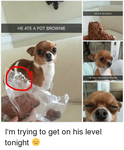 he ate a pot brownie he ate so much he 15117940 ✅ 25 best memes about pot brownies pot brownies memes