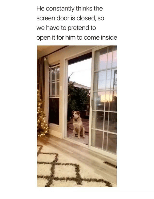 Memes, 🤖, and Him: He constantly thinks the  screen door is closed, so  we have to pretend to  open it for him to come inside