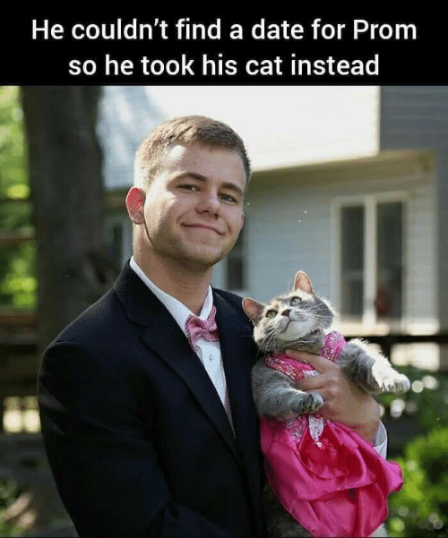 Date, Cat, and For: He couldn't find a date for Prom  so he took his cat instead