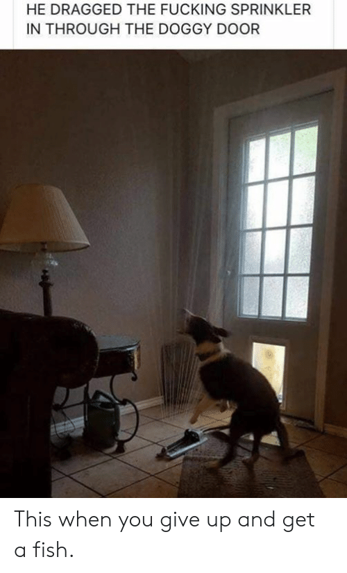 Dank, Fucking, and Fish: HE DRAGGED THE FUCKING SPRINKLER  IN THROUGH THE DOGGY DOOR This when you give up and get a fish.