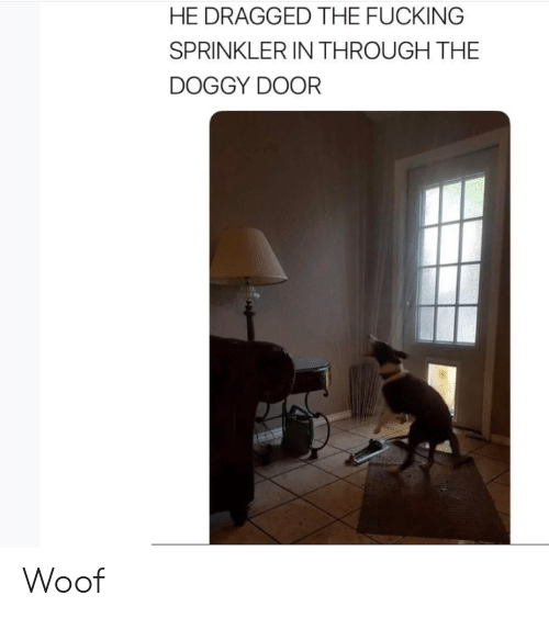 Door, Doggy, and Doggy Door: HE DRAGGED THE FUCKING  SPRINKLER IN THROUGH THE  DOGGY DOOR Woof