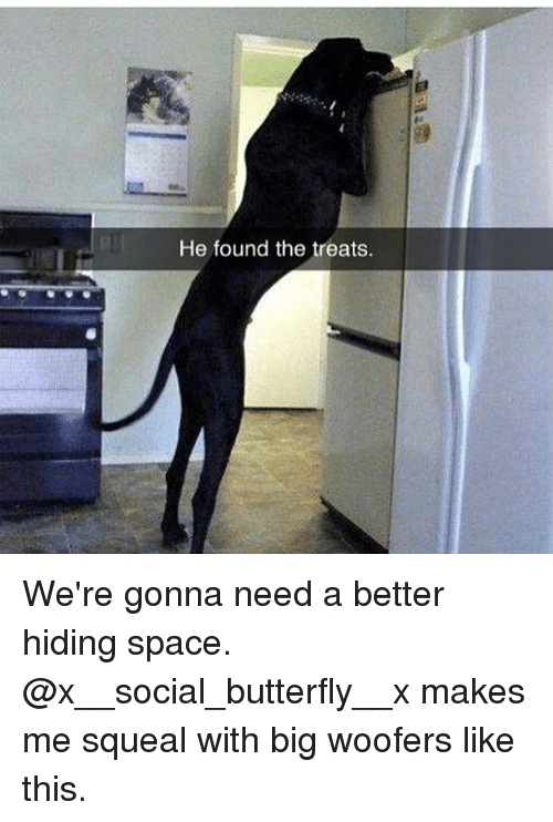 Memes, Butterfly, and Space: He found the treats. We're gonna need a better hiding space. @x__social_butterfly__x makes me squeal with big woofers like this.