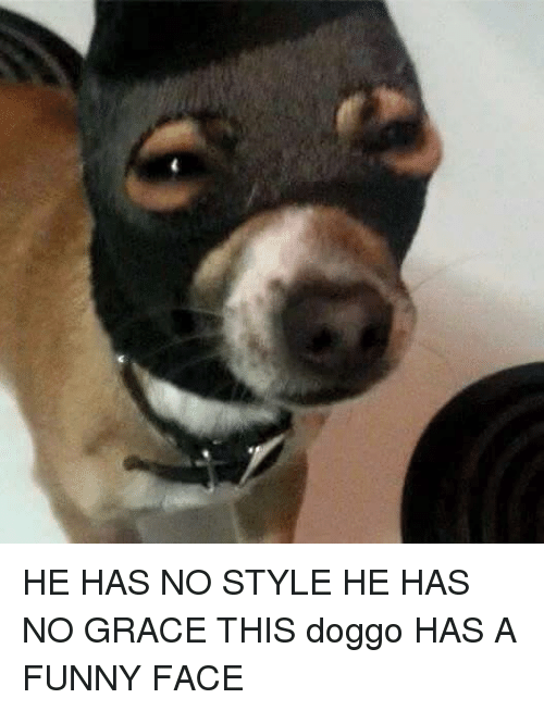 He Has No Style He Has No Grace This Doggo Has A Funny Face Funny