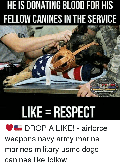 Dogs, Memes, and Respect: HE IS DONATING BLOOD FOR HIS  FELLOW CANINES IN THE SERVICE  CELEBRITIES  LIKE RESPECT ❤️🇺🇸 DROP A LIKE! - airforce weapons navy army marine marines military usmc dogs canines like follow