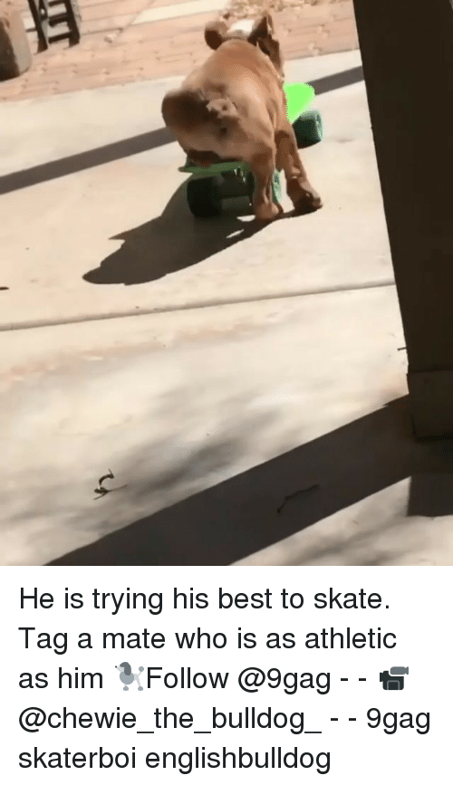 9gag, Memes, and Best: He is trying his best to skate. Tag a mate who is as athletic as him 🐩Follow @9gag - - 📹@chewie_the_bulldog_ - - 9gag skaterboi englishbulldog