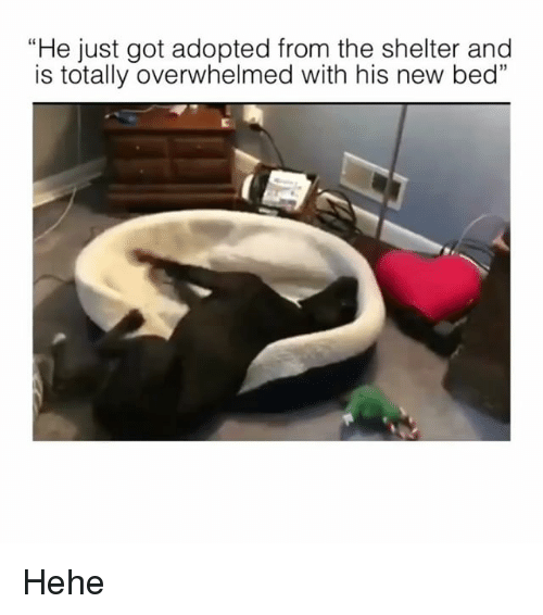 """Memes, 🤖, and Got: """"He just got adopted from the shelter and  is totally overwhelmed with his new bed"""" Hehe"""