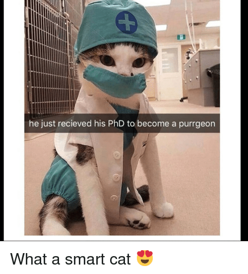 Grumpy Cat, Cat, and Phd: he just recieved his PhD to become a purrgeon What a smart cat 😍