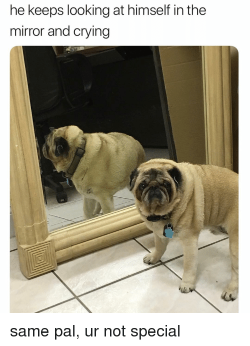 Crying, Memes, and Mirror: he keeps looking at himself in the  mirror and crying same pal, ur not special