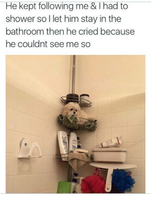 Shower, Him, and Following: He kept following me & Thad to  shower soI let him stay in the  bathroom then he cried because  he couldnt see me so