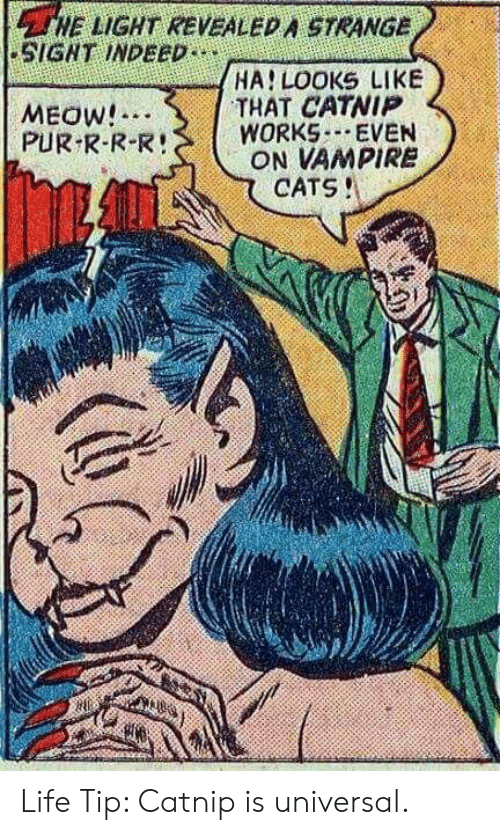 Cats, Life, and Indeed: HE LIGHT REVEALED A STRANGE  SIGNT INDEED  HA LOOKS LIKE  THAT CATNIP  WORKS EVEN  ON VAMPIRE  CATS!  MEOW!  PUR R-R-R! Life Tip: Catnip is universal.