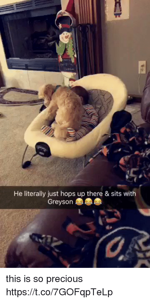 Precious, Girl Memes, and Hops: He literally just hops up there & sits with  Greyson this is so precious  https://t.co/7GOFqpTeLp
