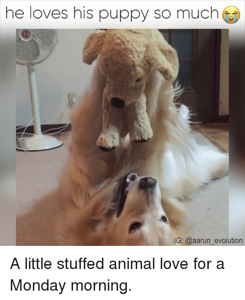 he loves his puppy so much ig aarun evolution a 14352153 25 best funny puppys memes animal love memes, is kill memes