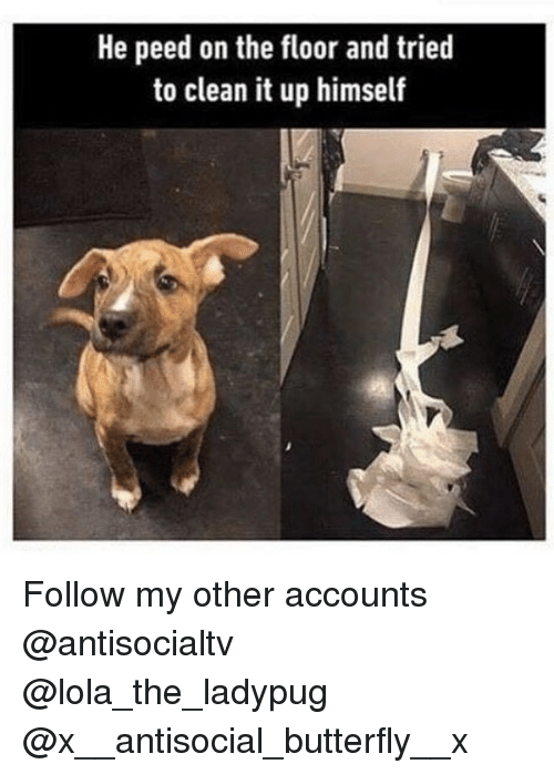 Memes, Butterfly, and Antisocial: He peed on the floor and tried  to clean it up himself Follow my other accounts @antisocialtv @lola_the_ladypug @x__antisocial_butterfly__x