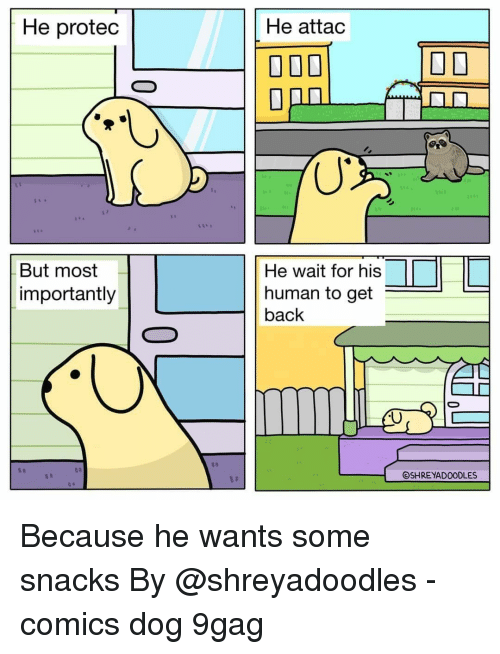 9gag, Memes, and Comics: He protedc  He attac  But most  importantly  He wait for his  human to get  back  OSHREYADOODLES Because he wants some snacks⠀ By @shreyadoodles⠀ -⠀ comics dog 9gag