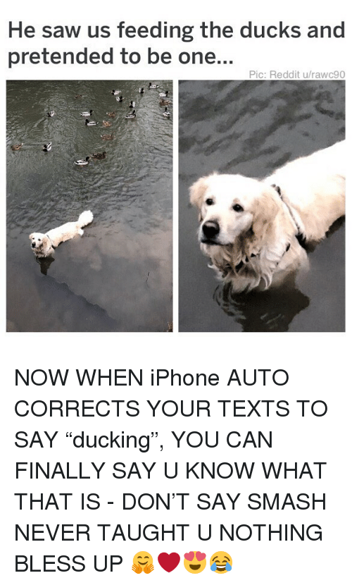 "Bless Up, Iphone, and Memes: He saw us feeding the ducks and  pretended to be one...  Pic: Reddit u/rawc90 NOW WHEN iPhone AUTO CORRECTS YOUR TEXTS TO SAY ""ducking"", YOU CAN FINALLY SAY U KNOW WHAT THAT IS - DON'T SAY SMASH NEVER TAUGHT U NOTHING BLESS UP 🤗❤️😍😂"