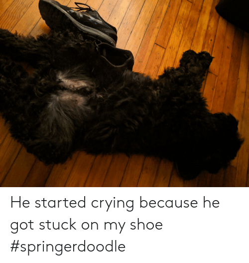 He Started Crying Because He Got Stuck on My Shoe #Springerdoodle