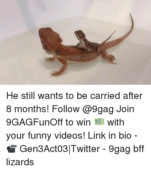 9gag, Funny, and Memes: He still wants to be carried after 8 months! Follow @9gag Join 9GAGFunOff to win 💵 with your funny videos! Link in bio - 📹 Gen3Act03|Twitter - 9gag bff lizards