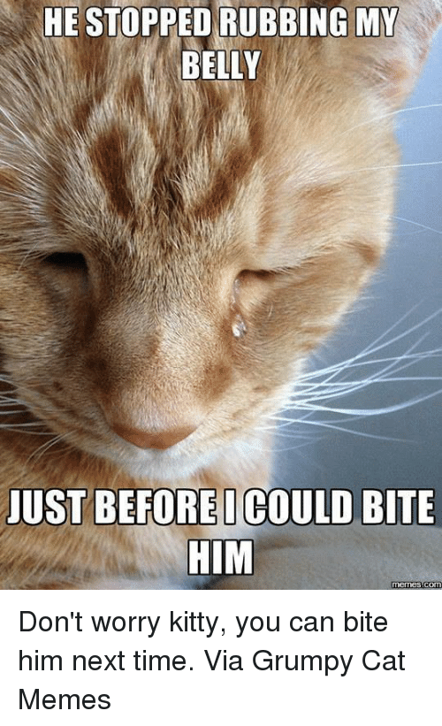 Cats, Kitties, and Meme: HE STOPPED RUBBING MY  BELLY  JUST BEFOREI COULD BITE  HIM  memes Com Don't worry kitty, you can bite him next time. Via Grumpy Cat Memes