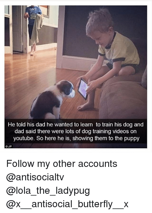 Dad, Memes, and Videos: He told his dad he wanted to learn to train his dog and  dad said there were lots of dog training videos orn  youtube. So here he is, showing them to the puppy Follow my other accounts @antisocialtv @lola_the_ladypug @x__antisocial_butterfly__x