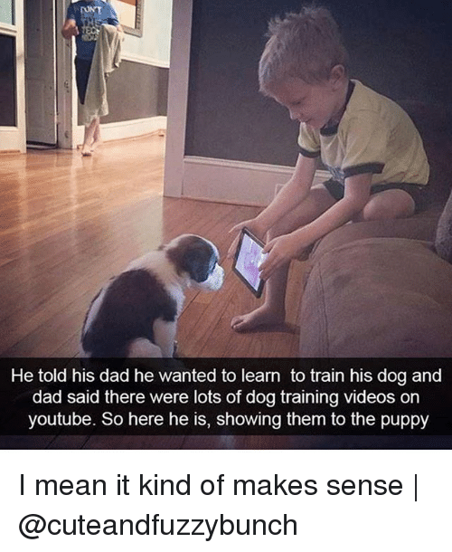 Dad, Memes, and Videos: He told his dad he wanted to learn to train his dog and  dad said there were lots of dog training videos on  youtube. So here he is, showing them to the puppy I mean it kind of makes sense | @cuteandfuzzybunch