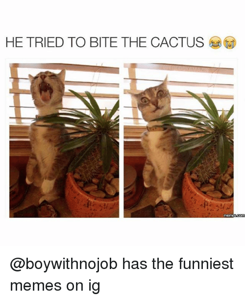 he tried to bite the cactus boywithnojob has the funniest 27919308 ✅ 25 best memes about cactus cactus memes