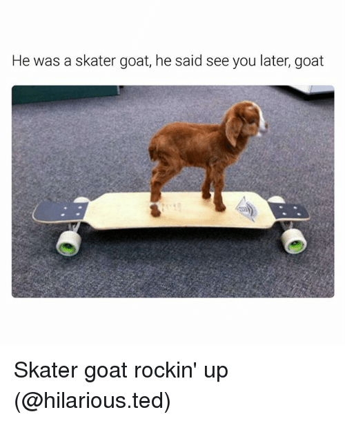 Funny, Ted, and Goat: He was a skater goat, he said see you later, goat Skater goat rockin' up (@hilarious.ted)