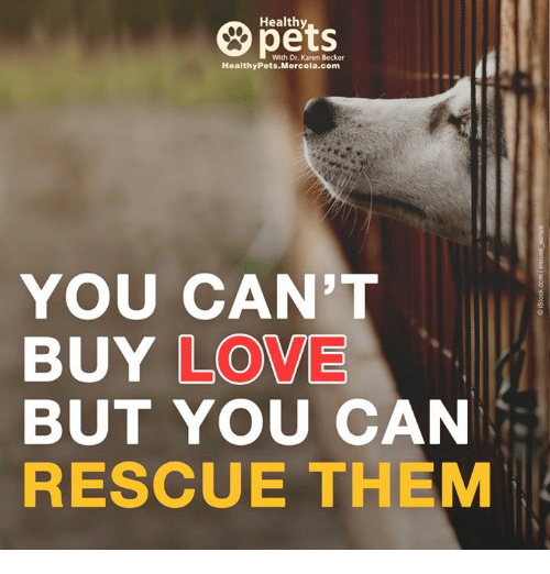 Memes, 🤖, and Becker: Healthy  With Dr. Karen Becker  Healthy Pets Mercola.com  YOU CAN'  BUY LOVE  BUT YOU CAN  RESCUE THEM