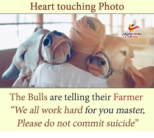 "Work, Bulls, and Heart: Heart touching Photo  LAUGHING  Celowrs  The Bulls are telling their Farmer  ""We all work hard for you master,  Please do not commit suicide"""