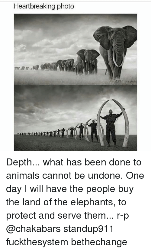Animals, Memes, and Elephants: Heartbreaking photo Depth... what has been done to animals cannot be undone. One day I will have the people buy the land of the elephants, to protect and serve them... r-p @chakabars standup911 fuckthesystem bethechange