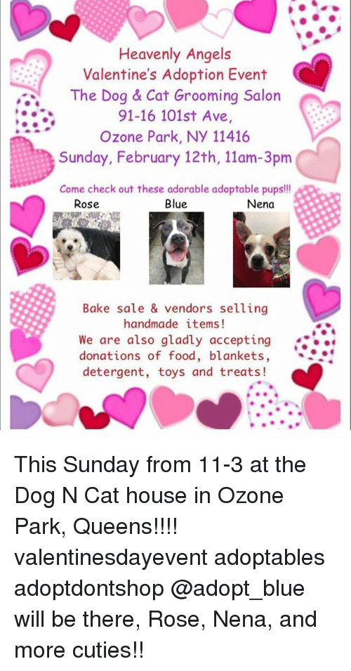 Dog N Cat House Ozone Park Ny