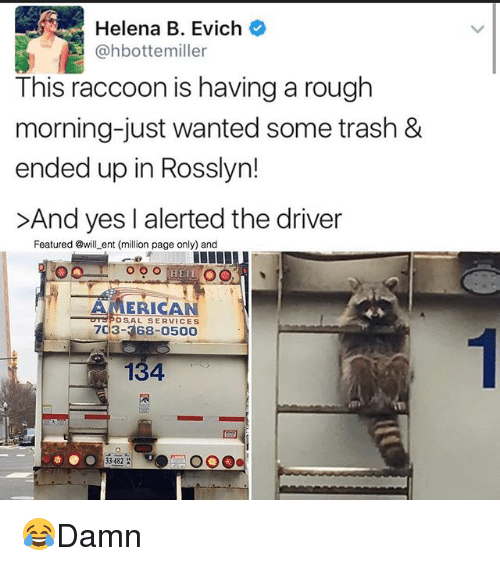 Memes, Trash, and American: Helena B. Evich  @hbottemiller  This raccoon is having a rough  morning-just wanted some trash &  ended up in Rosslyn!  >And yes I alerted the driver  Featured @will ent (million page only) and  HEL O  AMERICAN  DrSPO SAL SERVICES  703-368-0500  134  33482 😂Damn