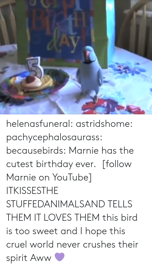 Animals, Aww, and Birthday: helenasfuneral:  astridshome:  pachycephalosaurass:  becausebirds:  Marnie has the cutest birthday ever.  [follow Marnie on YouTube]  ITKISSESTHE STUFFEDANIMALSAND TELLS THEM IT LOVES THEM  this bird is too sweet and I hope this cruel world never crushes their spirit   Aww 💜