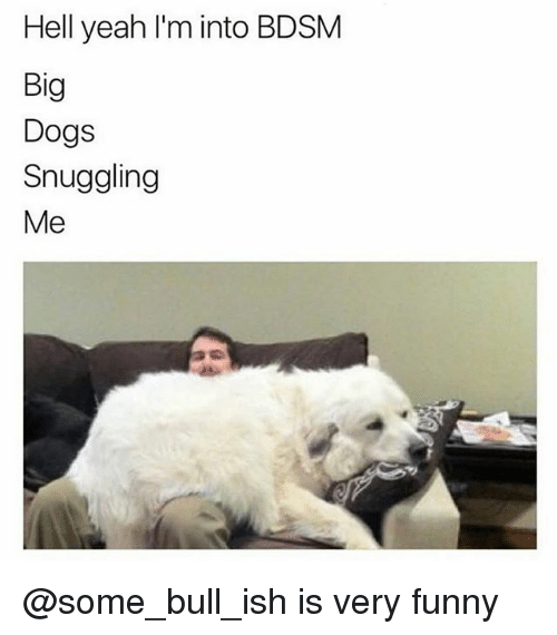 Dogs, Funny, and Memes: Hell yeah l'm into BDSM  Big  Dogs  Snuggling  Me @some_bull_ish is very funny