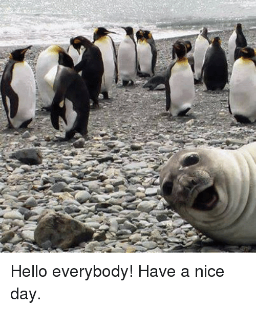 Hello Everybody Have A Nice Day Funny Meme On Meme