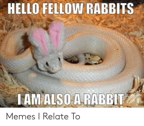 Hello, Memes, and Rabbit: HELLO FELLOW RABBITS  TAM ALSO A RABBIT Memes I Relate To