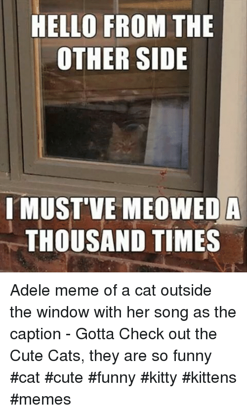 Adele, Cats, and Cute: HELLO FROM THE  OTHER SIDE  I MUST'VE MEOWEDA  THOUSAND TIMES Adele meme of a cat outside the window with her song as the caption - Gotta Check out the Cute Cats, they are so funny #cat #cute #funny #kitty #kittens #memes