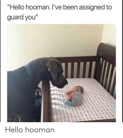"""Hello, Been, and You: """"Hello hooman. I've been assigned to  guard you"""" Hello hooman"""