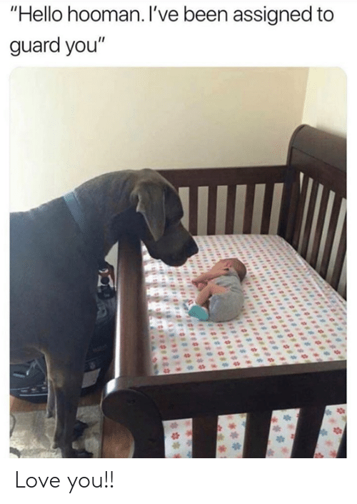 """Dank, Hello, and Love: """"Hello hooman. I've been assigned to  guard you"""" Love you!!"""
