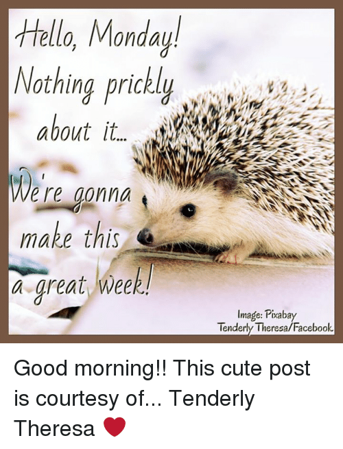Hello Monday Nothing Prickly About It Ere Gonna Make This A Great