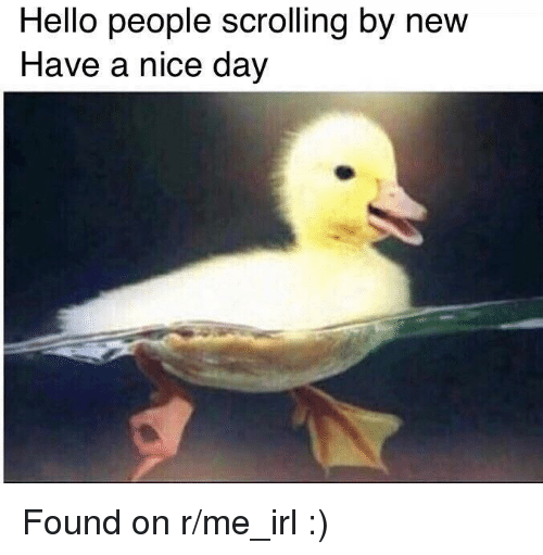 Hello, Irl, and Me IRL: Hello people scrolling by new  Have a nice day  2 Found on r/me_irl :)