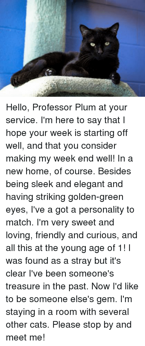 hello professor