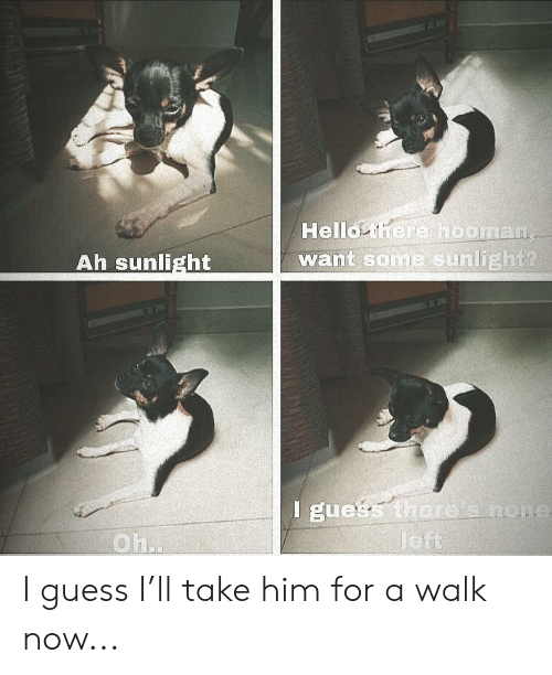 Hello, Reddit, and Guess: Hello there hooman  want some sunlight?  Ah sunlight  l guess there' snome  Jeft  Oh.. I guess I'll take him for a walk now...