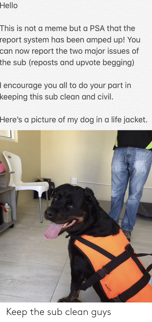 Hello, Life, and Meme: Hello  This is not a meme but a PSA that the  system has been amped up! You  now report the two major issues of  sub (reposts and upvote begging)  report  can  the  I encourage you all to do your part in  keeping  this sub clean and civil.  Here's  a picture of my dog in a life jacket. Keep the sub clean guys