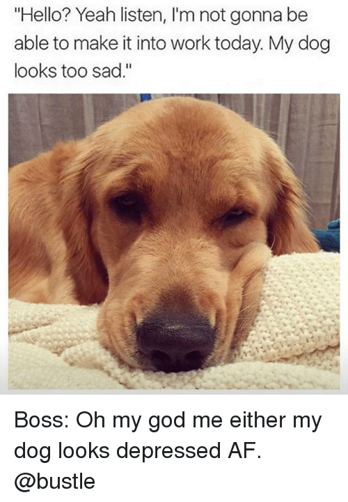 "Af, God, and Hello: ""Hello? Yeah listen, I'm not gonna be  able to make it into work today. My dog  looks too sad."" Boss: Oh my god me either my dog looks depressed AF. @bustle"