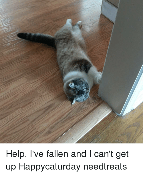 help i ve fallen and i can t get up happycaturday needtreats meme