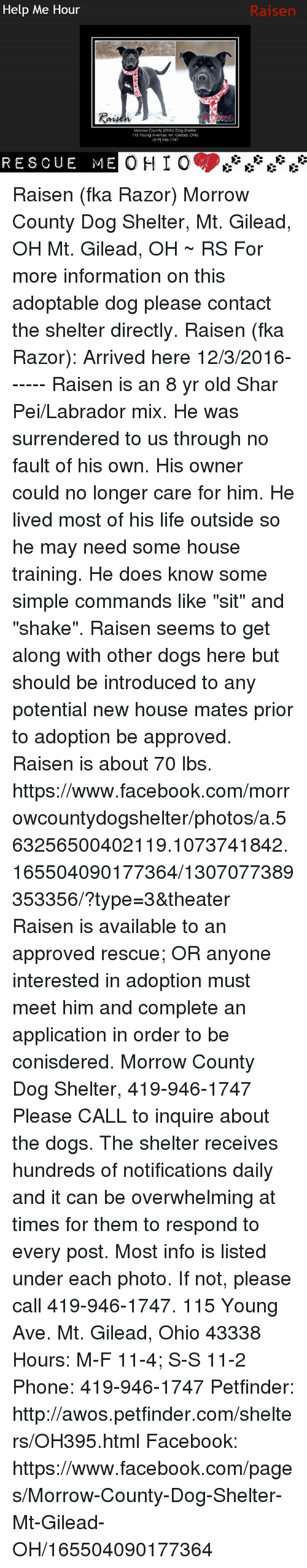 Ohio morrow county mount gilead - Dogs Facebook And Life Help Me Hour Morrow County Ohio Dog